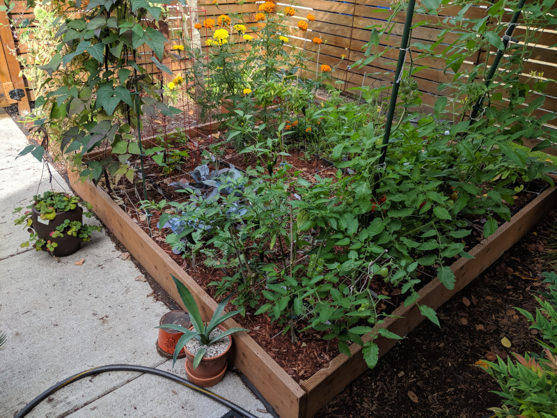 My summer garden 8x8 feet full of green veggies